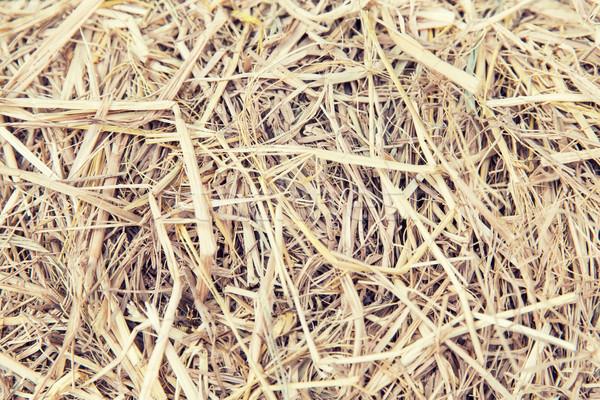dry grass or hay texture Stock photo © dolgachov