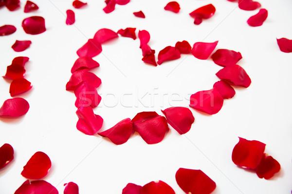 Rood rose bloemblaadjes hartvorm liefde romantiek Stockfoto © dolgachov