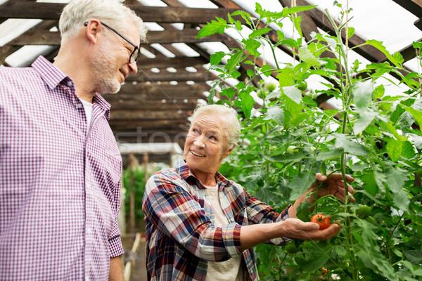 happy senior couple at farm greenhouse Stock photo © dolgachov