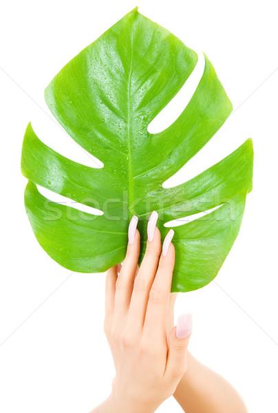 female hands with green leaf Stock photo © dolgachov