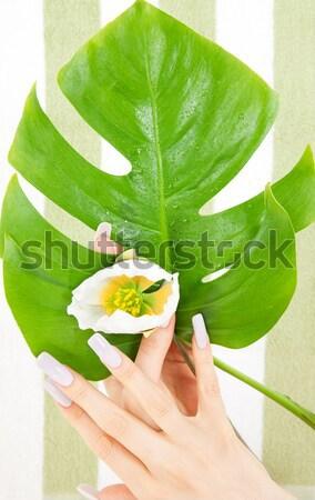 Női törzs zöld levél fehér kép nő Stock fotó © dolgachov
