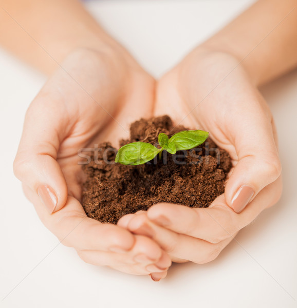 hands with green sprout and ground Stock photo © dolgachov