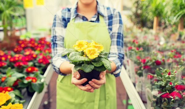 Stock photo: close up of woman holding flowers in greenhouse