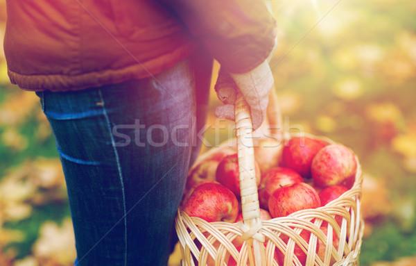 Photo stock: Femme · pommes · panier · automne
