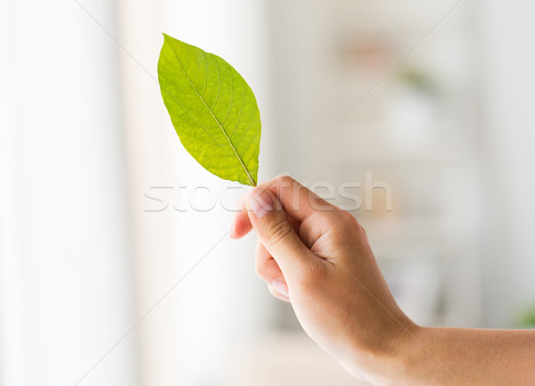 close up of woman hand holding green leaf Stock photo © dolgachov