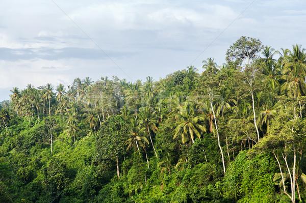 Erdő tájkép Sri Lanka természet növényvilág fa Stock fotó © dolgachov