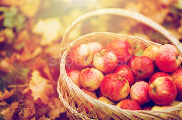 Wiklina koszyka dojrzały czerwony jabłka jesienią Zdjęcia stock © dolgachov