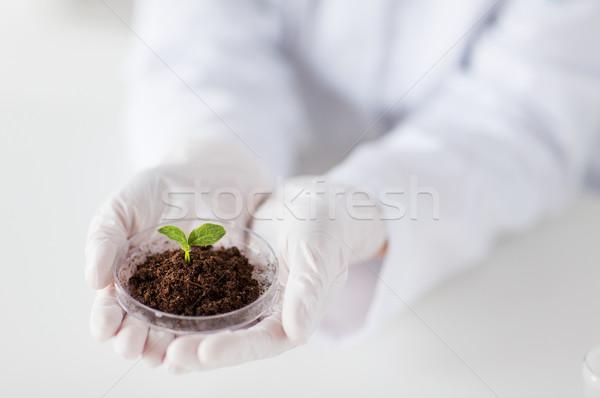 Scienziato mani impianto suolo scienza Foto d'archivio © dolgachov