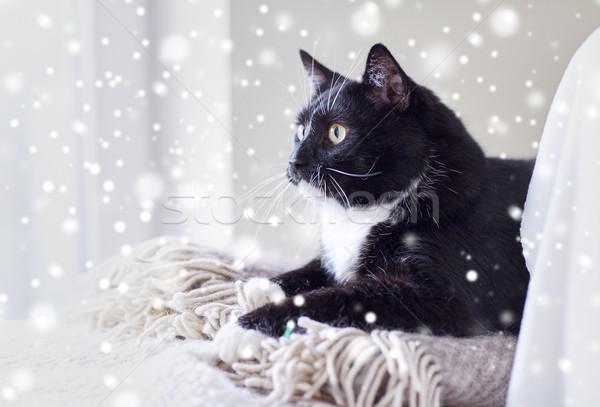 black and white cat lying on plaid at home Stock photo © dolgachov