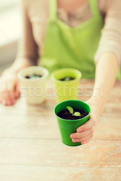 女性 手 ポット 芽 ストックフォト © dolgachov