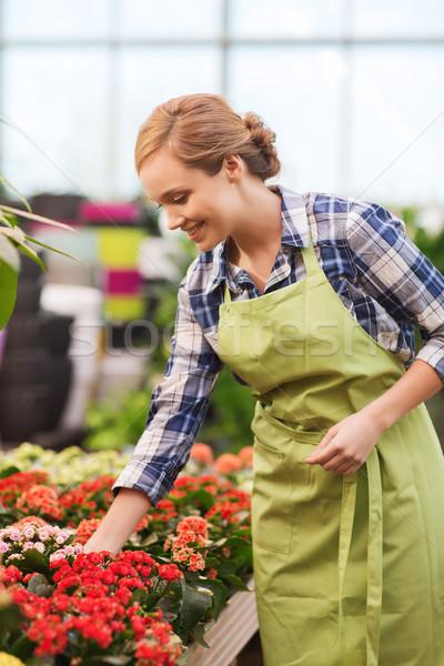 Szczęśliwy kobieta opieki kwiaty szklarnia Zdjęcia stock © dolgachov