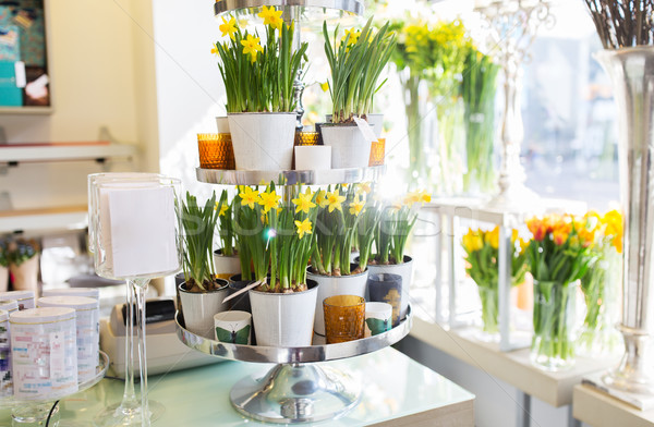 narcissus flowers on stand at flower shop Stock photo © dolgachov