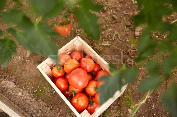 red tomato's in wooden box at summer garden Stock photo © dolgachov
