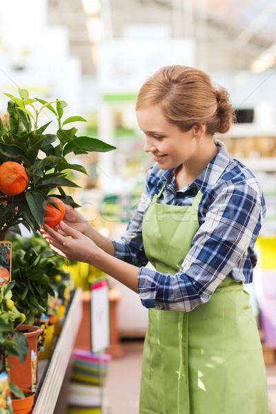 happy woman touching mandarin tree in greenhouse Stock photo © dolgachov