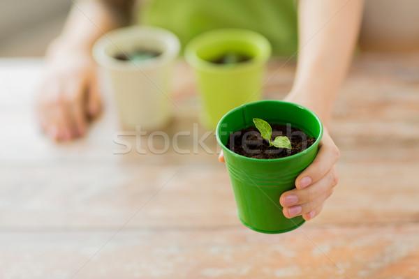 Közelkép nő kéz tart edény hajtás Stock fotó © dolgachov