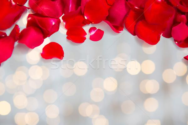 Rood rose bloemblaadjes exemplaar ruimte liefde romantiek Stockfoto © dolgachov