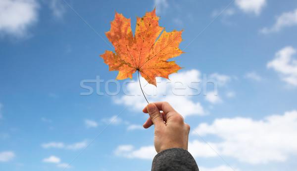 El sonbahar akçaağaç yaprağı gökyüzü sezon Stok fotoğraf © dolgachov