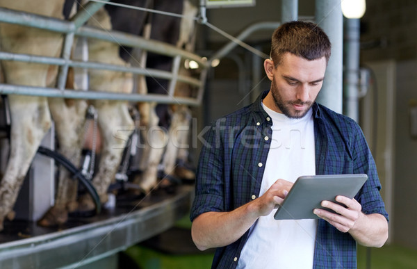 young man with tablet pc and cows on dairy farm Stock photo © dolgachov