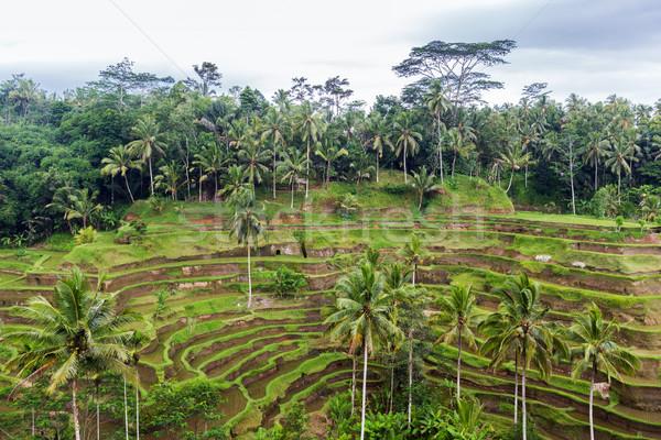 Rijst plantage terras Sri Lanka landbouw Stockfoto © dolgachov