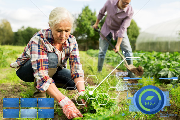 senior couple working in garden or at summer farm Stock photo © dolgachov