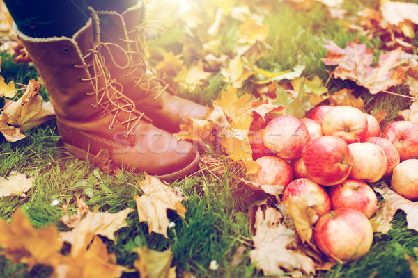 woman feet in boots with apples and autumn leaves Stock photo © dolgachov