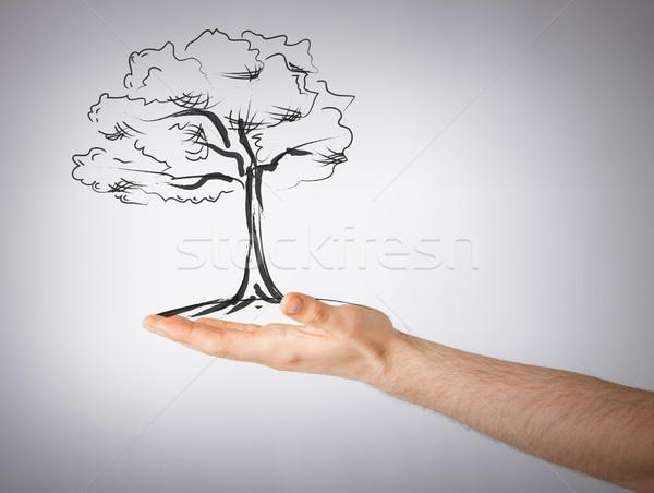Homem pequeno árvore mão ambiente ecologia Foto stock © dolgachov