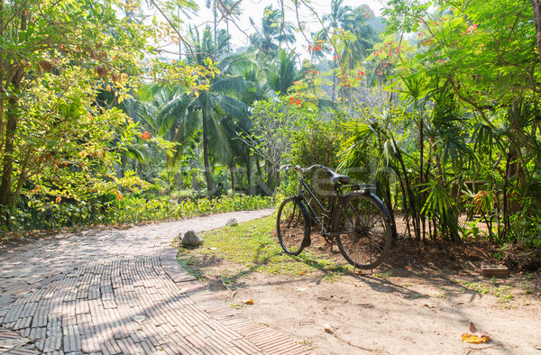 bicycle at tropical park roadway Stock photo © dolgachov