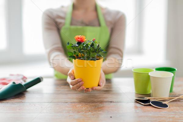 Közelkép nő kezek tart rózsák bokor Stock fotó © dolgachov