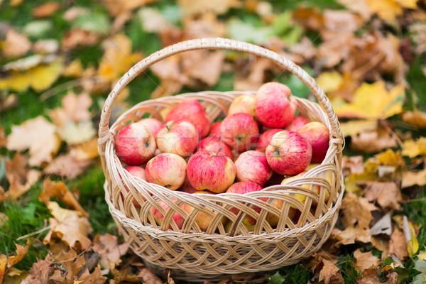 Osier panier rouge pommes automne Photo stock © dolgachov