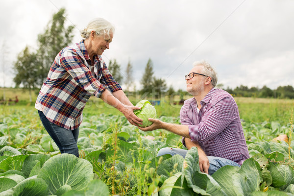 капуста фермы садоводства Сток-фото © dolgachov
