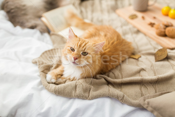red tabby cat lying on blanket at home in autumn Stock photo © dolgachov