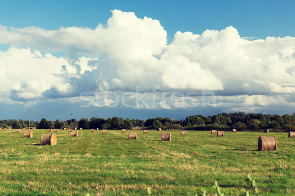 Széna tekercsek nyár mező mezőgazdaság aratás Stock fotó © dolgachov