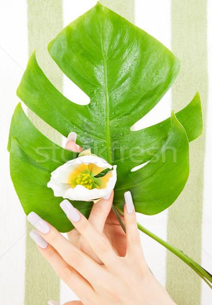 Női kezek zöld levél virág kép nő Stock fotó © dolgachov