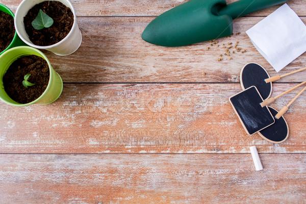 苗 ガーデニング 庭園 種子 ストックフォト © dolgachov