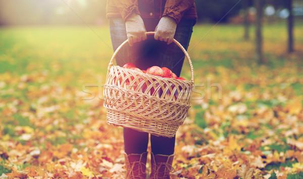 Photo stock: Femme · panier · pommes · automne · jardin