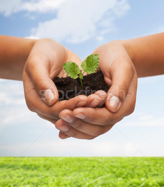 женщину рук завода почвы плодородие Сток-фото © dolgachov