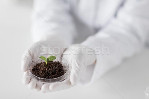 ученого рук завода почвы науки Сток-фото © dolgachov