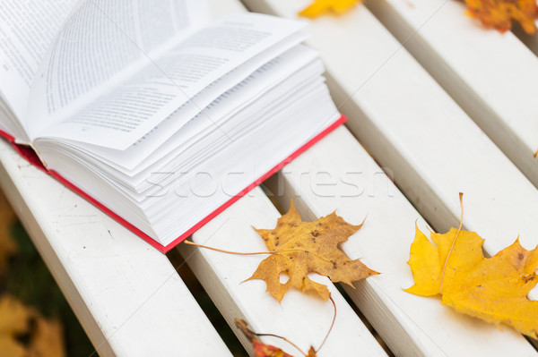 Open boek park bank seizoen onderwijs Stockfoto © dolgachov