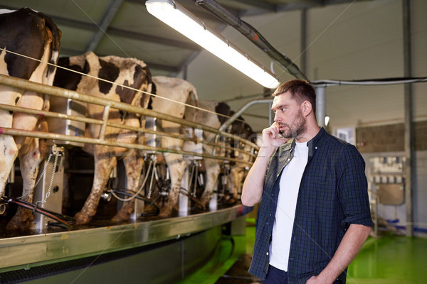 man calling on cellphone and cows at dairy farm Stock photo © dolgachov