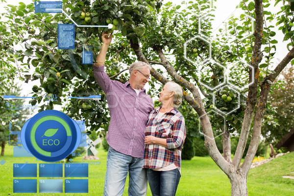 Elma ağacı yaz bahçe organik Stok fotoğraf © dolgachov