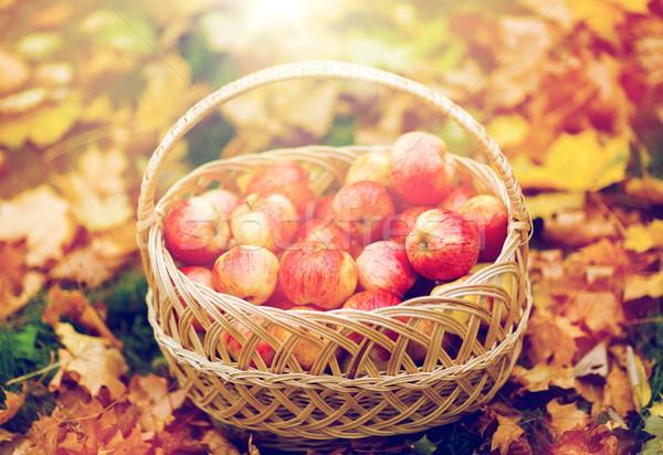 wicker basket of ripe red apples at autumn garden Stock photo © dolgachov