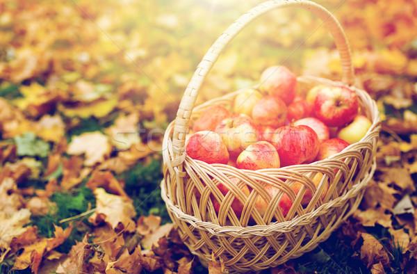 плетеный корзины зрелый красный яблоки осень Сток-фото © dolgachov