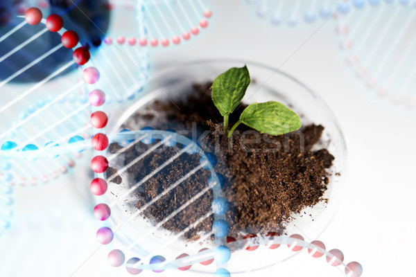 Stock photo: close up of plant and soil in lab