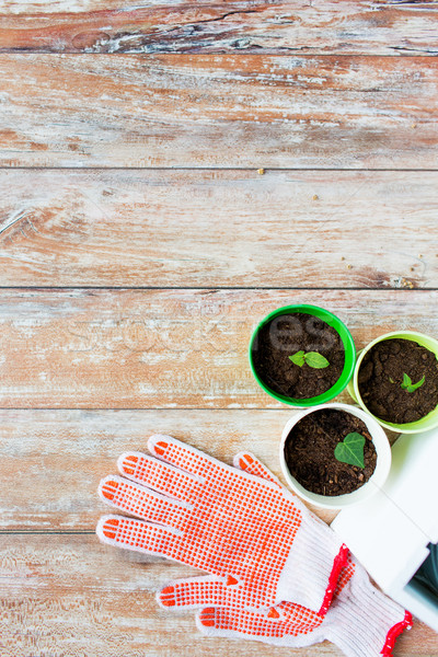 close up of seedlings and garden gloves Stock photo © dolgachov