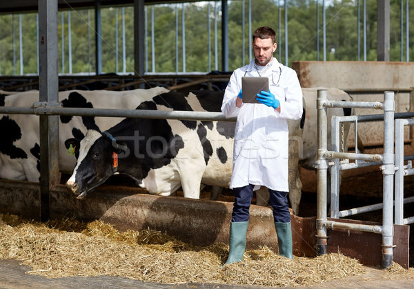 veterinarian with tablet pc and cows on dairy farm Stock photo © dolgachov