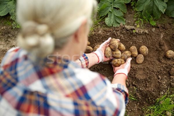 Foto stock: Jeans · batatas · fazenda · jardim · jardinagem