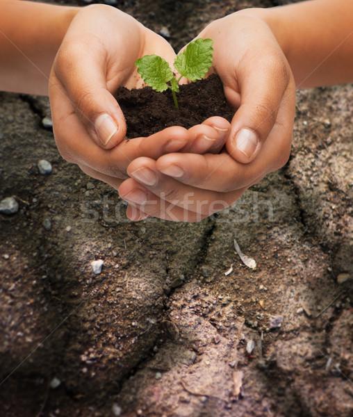 Kobieta ręce roślin gleby płodność Zdjęcia stock © dolgachov
