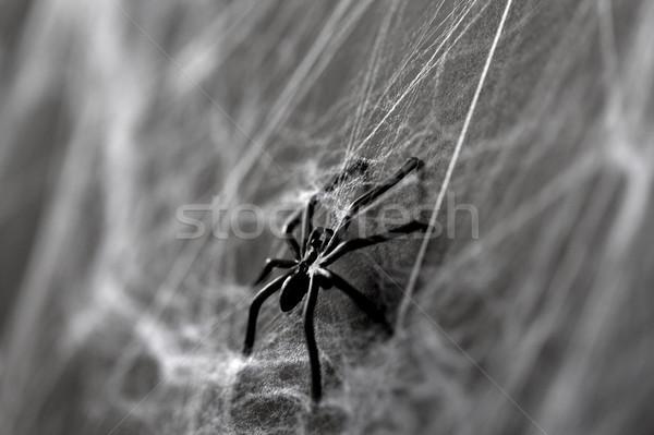 Halloween décoration noir jouet araignée toile d'araignée Photo stock © dolgachov