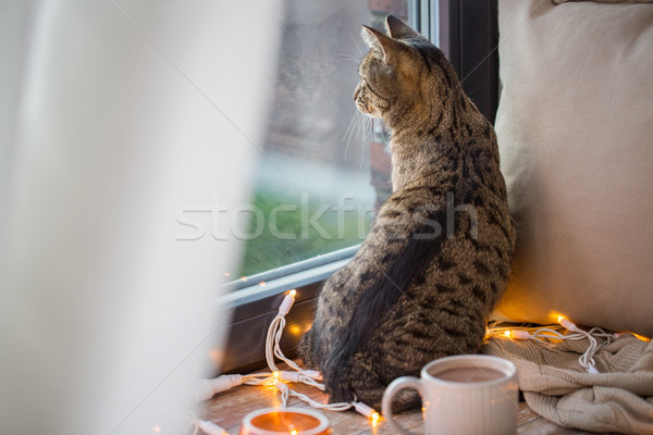 tabby cat looking through window at home Stock photo © dolgachov