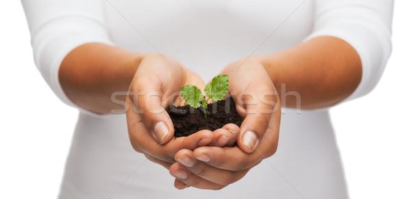 Donna mani impianto suolo fecondità Foto d'archivio © dolgachov